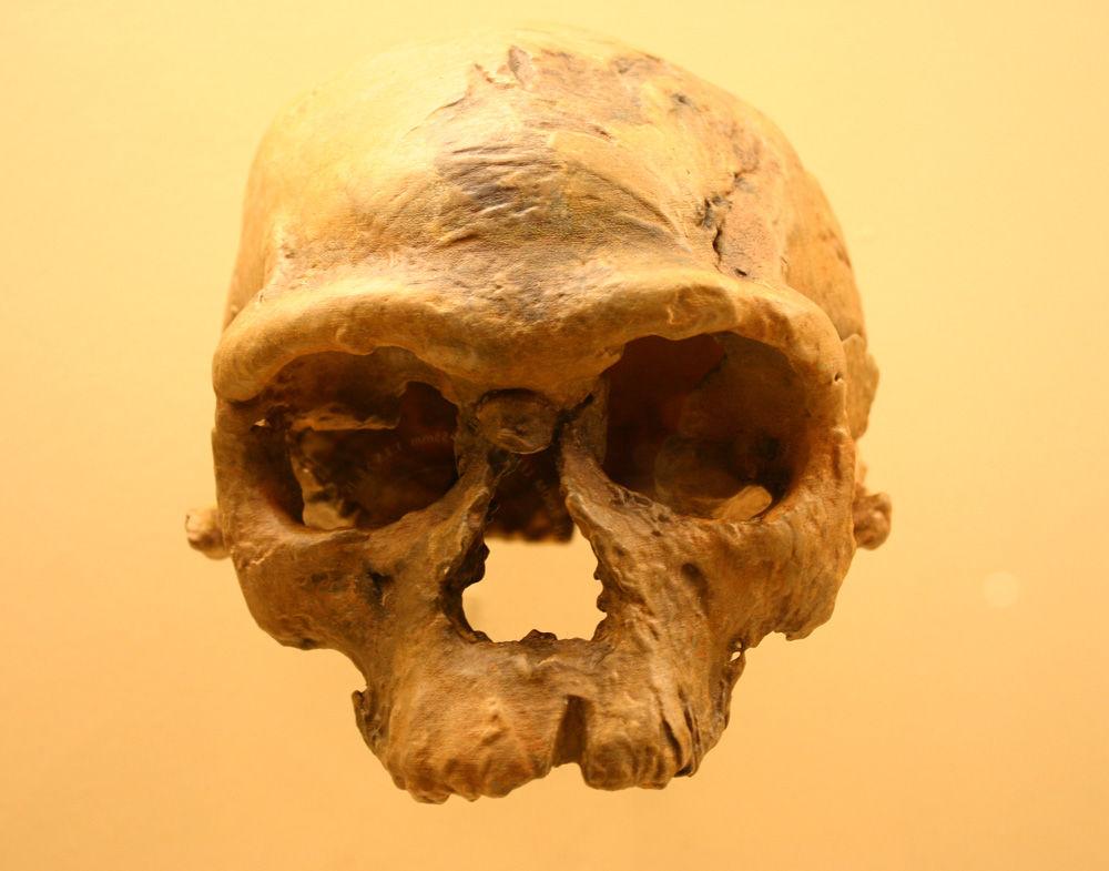 Découverte du plus ancien crâne homo sapiens